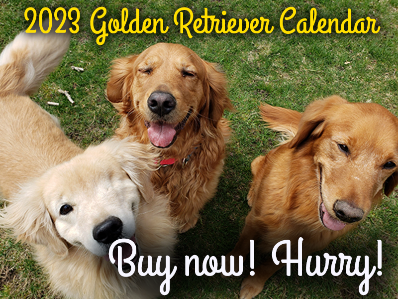Buy 2019 golden retriever calendars here, benefiting Golden Retriever Rescue Resource, serving Ohio, Michigan and Indiana.