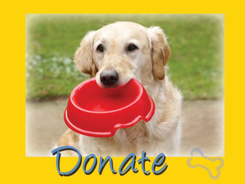 Donate to Golden Retriever Rescue Resource graphic