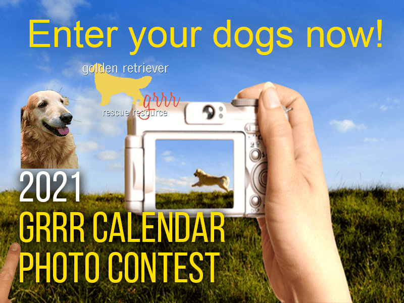 Entry details for our 2019 golden retriever calendar photo contest. Winning golden retrievers are featured in our 2019 golden retriever calendar.