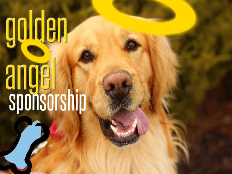 golden retriever rescue resource golden angel sponsorship