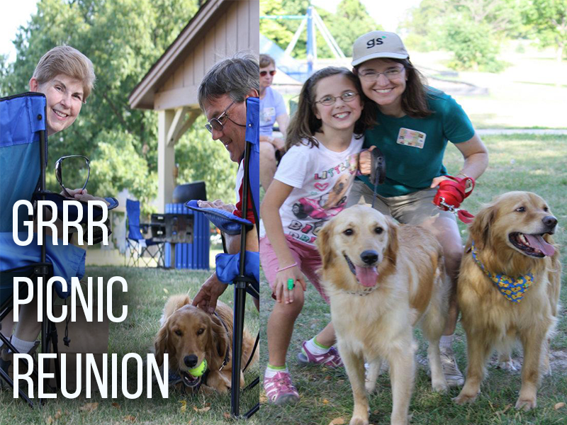 Golden Retriever Rescue Resource picnic reunion. A golden retriever lovers event for those who have adopted golden retrievers through the dog resue.