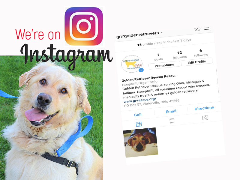 Follow Golden Retriever Rescue Resource on Instagram @grrrgoldenretrievers. Golden Retriever Rescue Resource, serving Ohio, Michigan and Indiana.