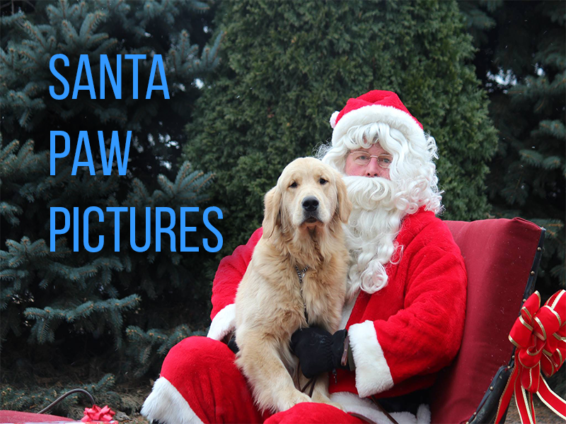 Golden Retriever Rescue Resource pictures with santa claus for dogs. Holiday photographs for dogs in Toledo Ohio