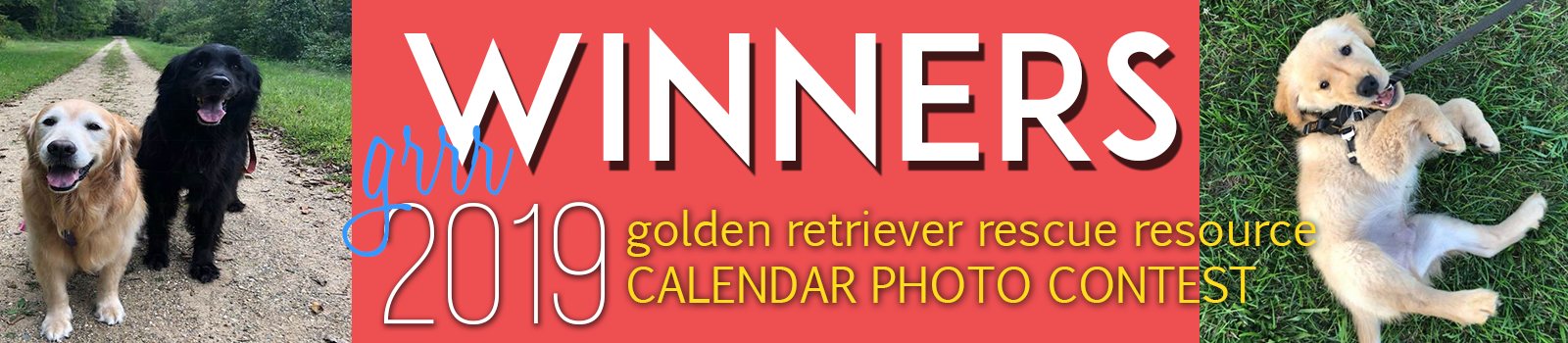 golden retriever calendar photo contest header graphic
