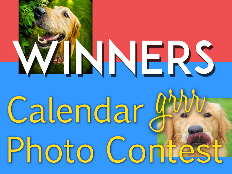 Vote for your favorite Golden Retriever to be featured in our 2019 Golden Retriever Calendar. Winning golden retrievers are featured in our 2019 golden retriever calendar.